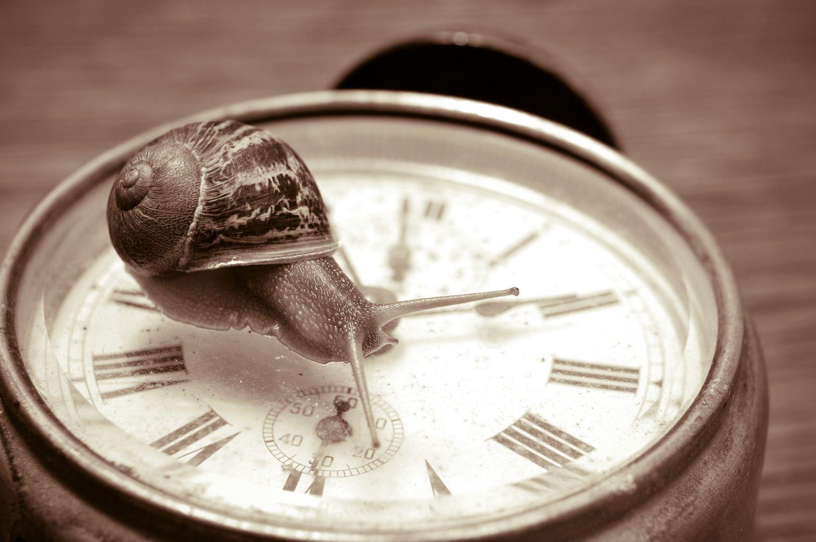 Urgence ralentir ou l'éloge de la lenteur